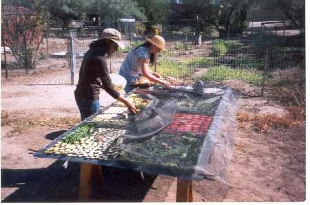 Food Preservation and Storage in the Desert